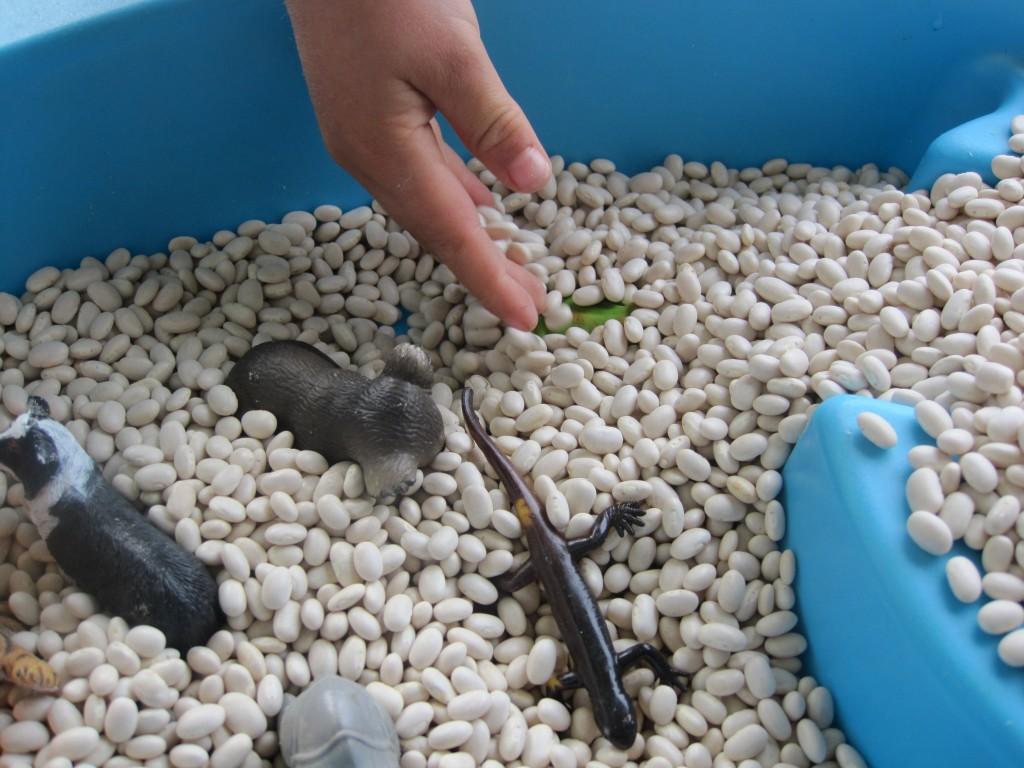 Preschool Outdoor Activities: Hide Toy Animals in Beans