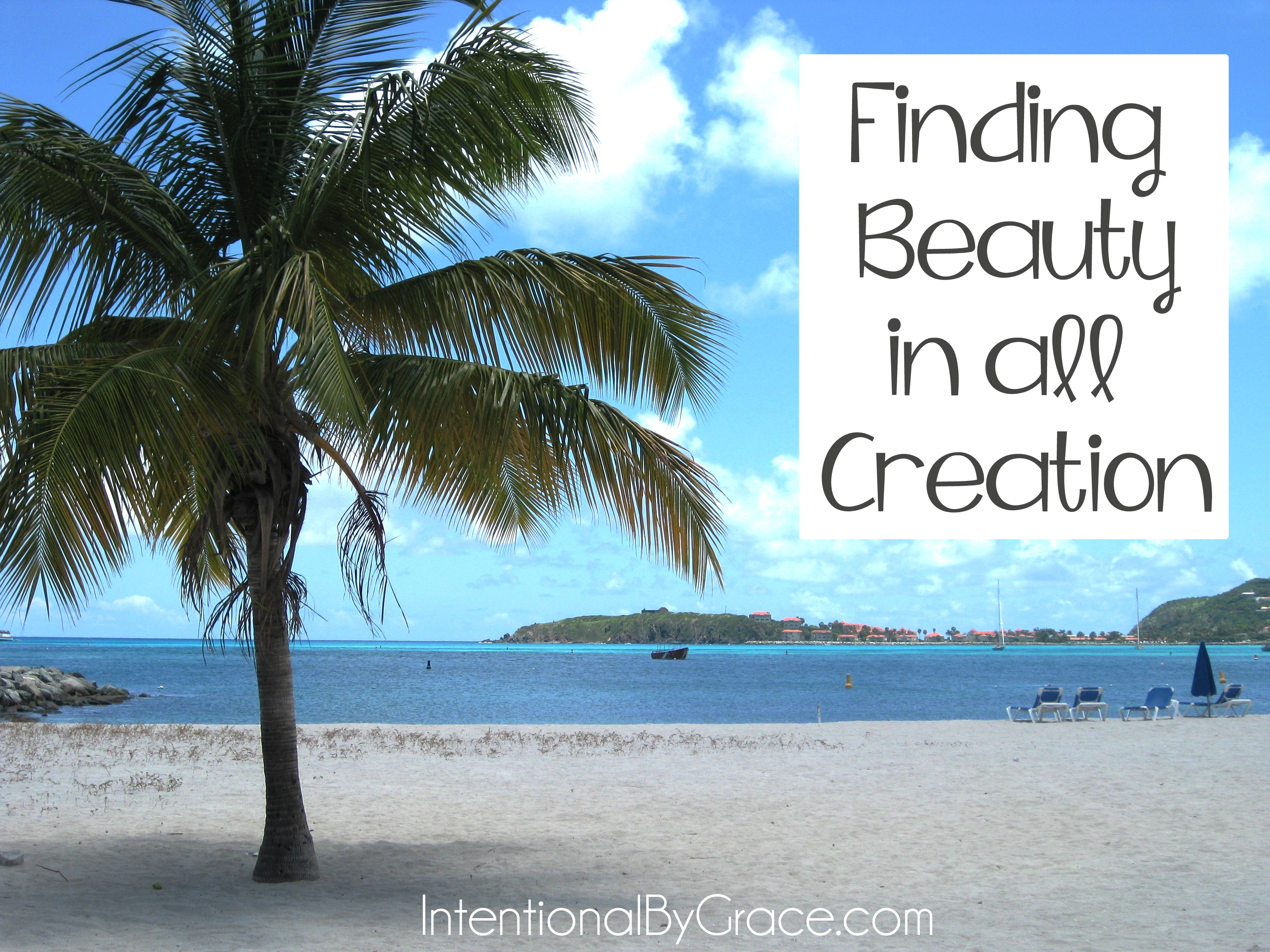 finding beauty in all creation