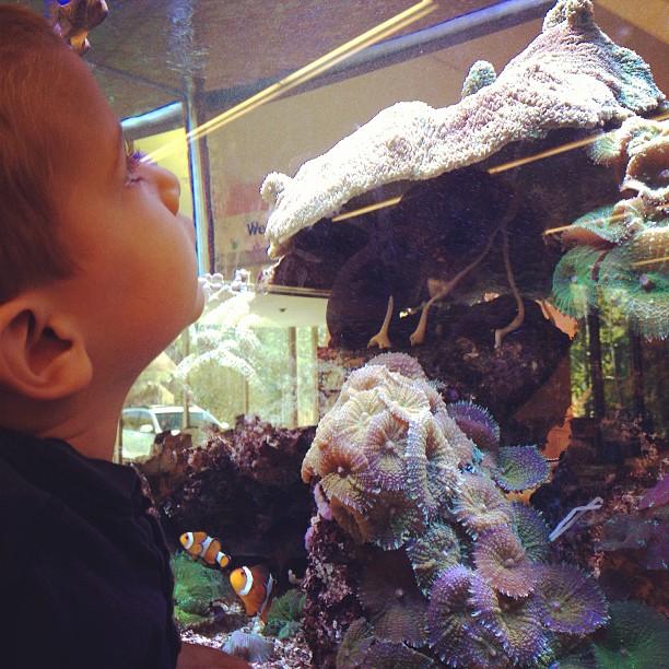 observing fish