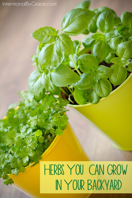 List of herbs you can grow in your back yard. It's too easy not to try! | IntentionalByGrace.com