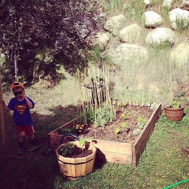 vegetable garden in June