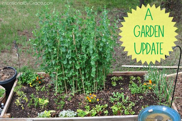 a garden update!