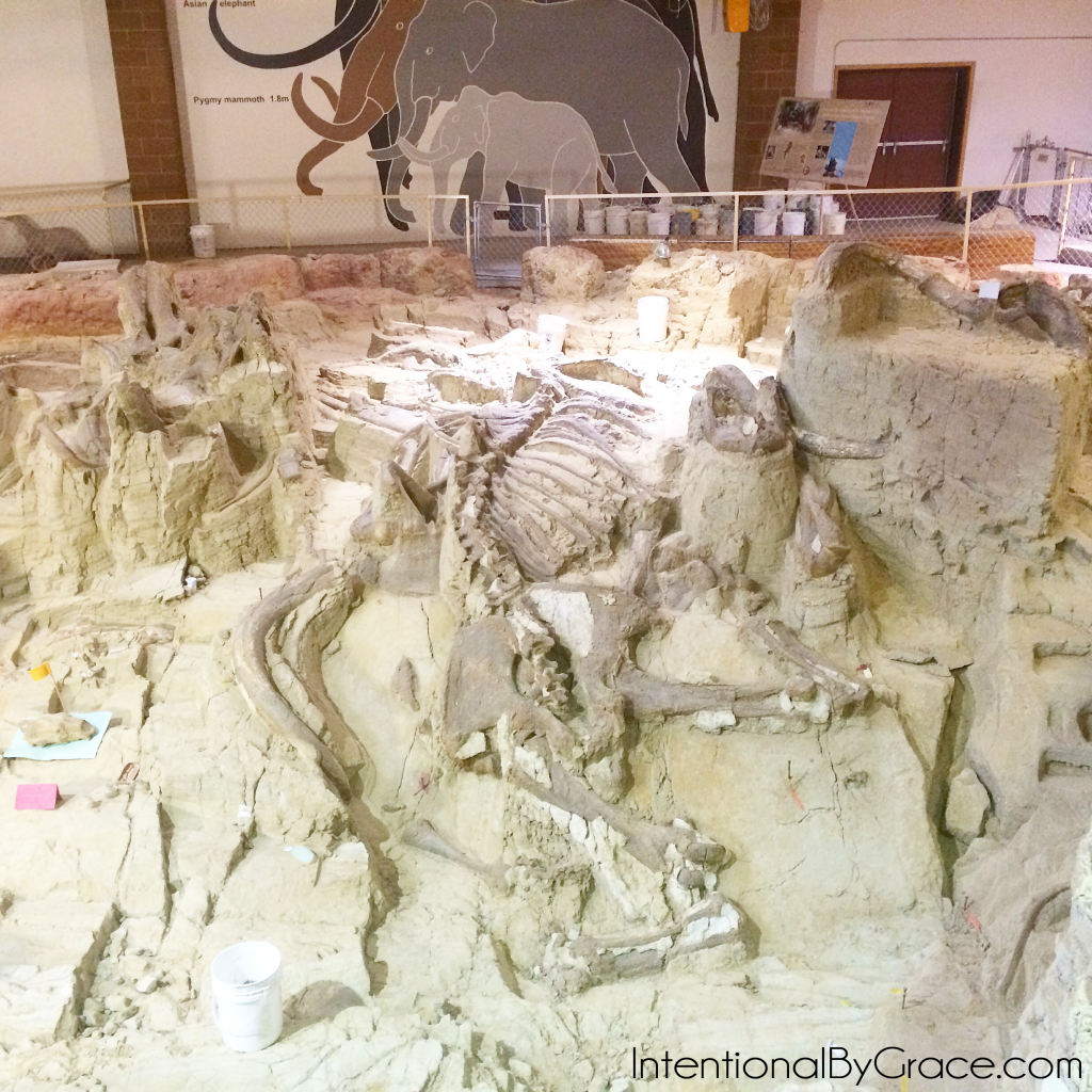 wooly mammoth site 2