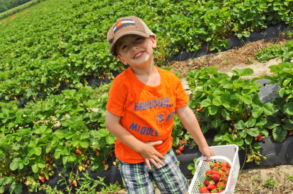 Strawberry Picking 2015-10