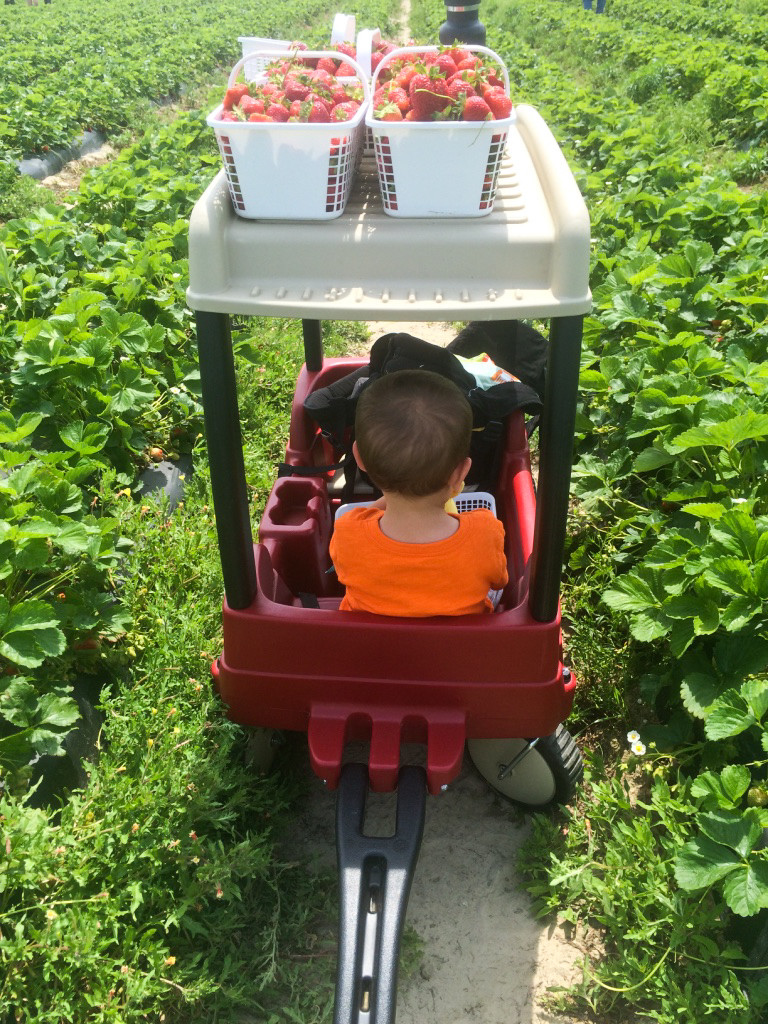 Strawberry Picking 2015-25