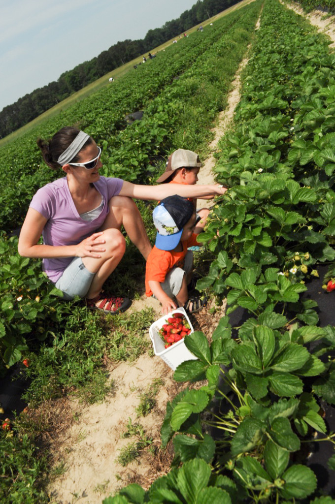 Strawberry Picking 2015-7