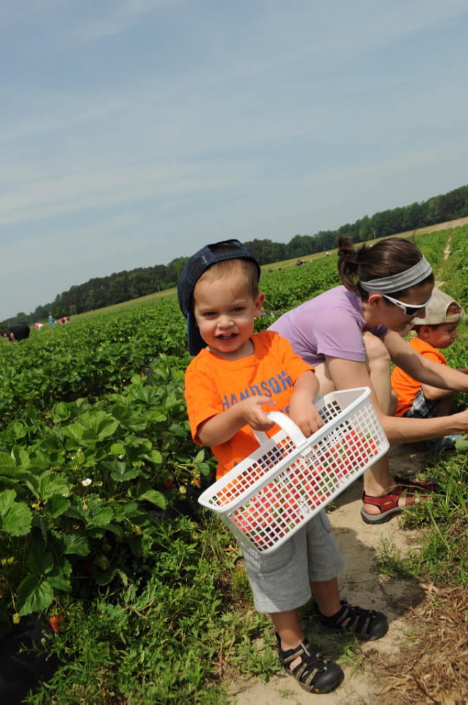 Strawberry Picking 2015-8